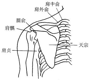 图17-3肩中俞穴取穴图