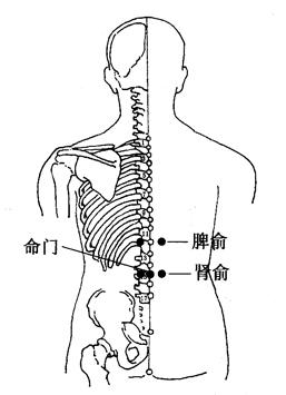 图4-3-1脾俞、肾俞、命门