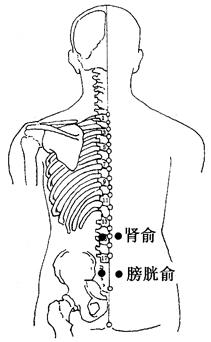图4-4-1肾俞、膀胱俞