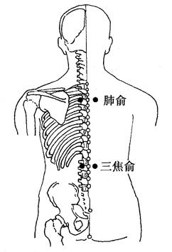 图4-5-1肺俞、三焦俞