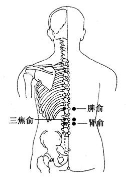 图4-5-3脾俞、三焦俞、肾俞